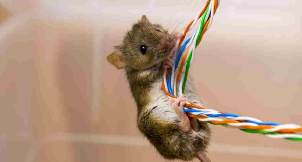 mouse killer spray in Pakistan