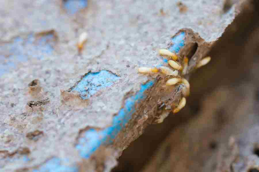 termite control services Islamabad