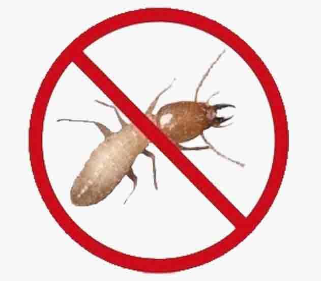Termite Control Services in Rawalpindi