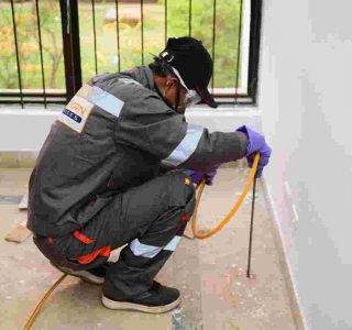 Termite control services in Islamabad