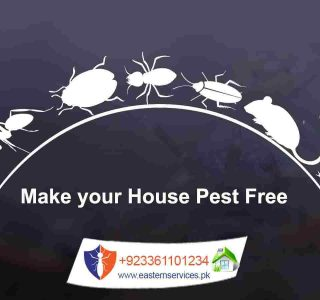 pests free home fumigation services in islamabad