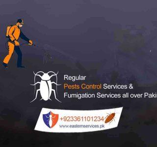 regular pest control services in pakistan