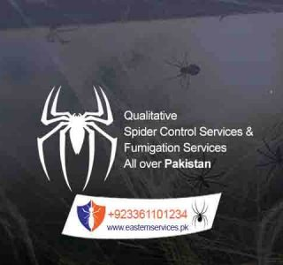spider control services in rawalpindi islamabad & all over Pakistan