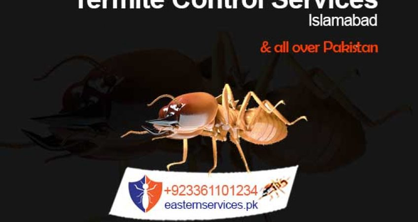 best termite control services islamabad